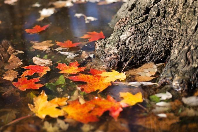 autumn-2900166_1920